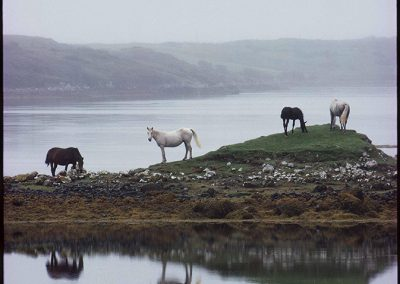 Horses Grazing, Connemara, County Galway, 1988