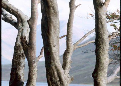 Bare Trees, Mayo, 1996