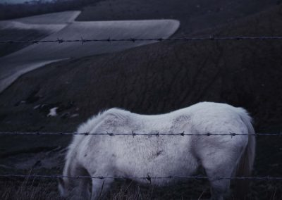 White Horse, Sussex Downs, 1985